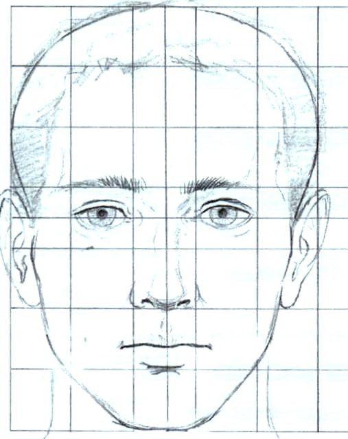 Как научиться рисовать портреты новичку - пропорции головы - фото