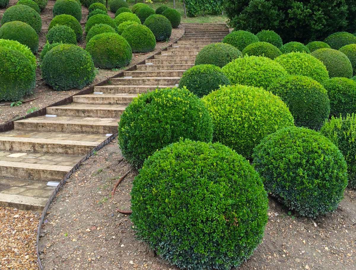 Популярные декоративные кустарники для вашей дачи